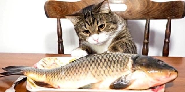 Ο Θεός την μέρα του Ευαγγελισμού, έστειλε το ψάρι μέσω ενός... γάτου !