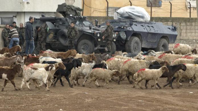 Κτηνοβασία στην Συρία : Κούρδοι μαχητές απελευθέρωσαν χιλιάδες πρόβατα από «πορνείο ζώων» του ISIS
